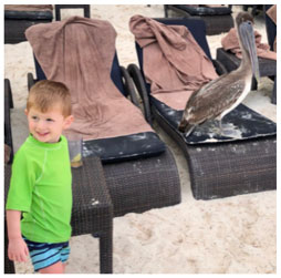 A little boy looking at a pelican